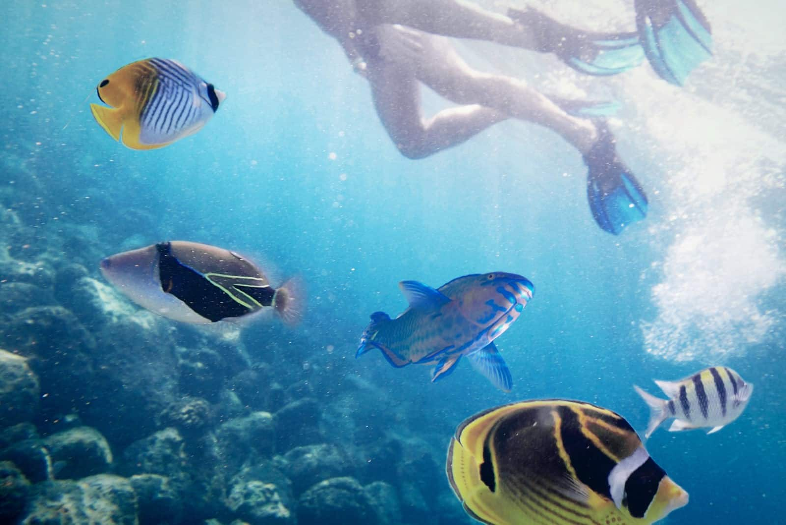 5 Ways Children Can Help Our Oceans