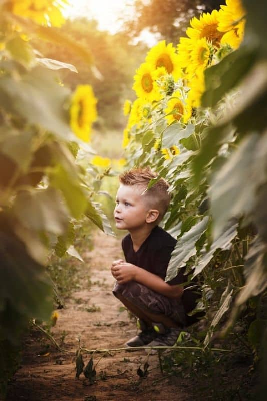 boy sitting in sunflower field